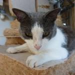 paradoxalement, le chat mistigri aime bien l'extension des enfants sans les enfants et sans les ouvriers...